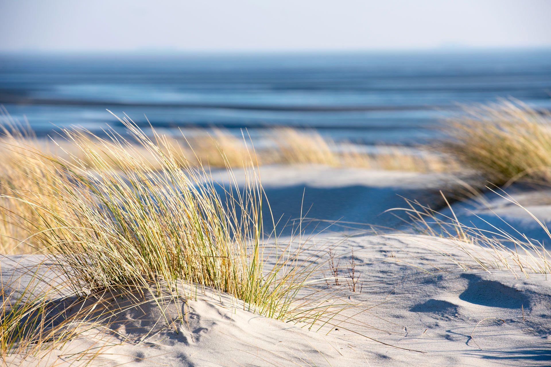 fond dunes sottile